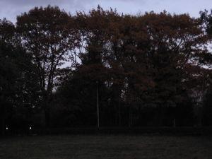Dit Zijn Geen Gewone Eikebomen, Wel Mooie Kleur
