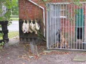Kira Met Vier Hanen Zonder Kop