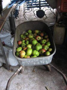Kruiwagen Met Appels In Koestal