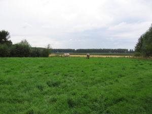 Paarden Ijzendijke Op Bezoek