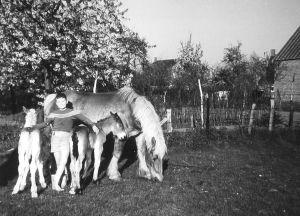 Veulens 1960 Met Kleine Karel
