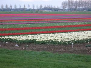 De Tulpen Van Piet