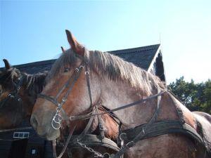 Paarden Van Der Stallen
