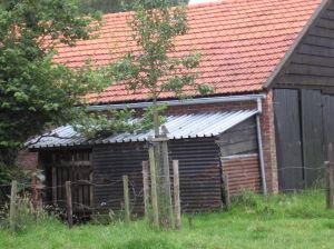 Steenuil Op Boompaal