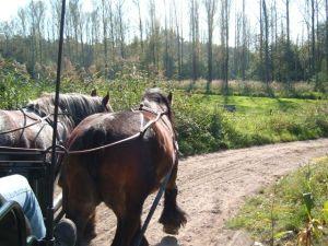 Tocht Met Paarden
